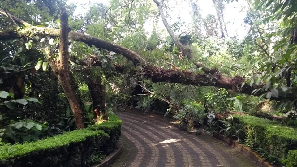 Reportan árboles caídos en Cerro del Macuiltépetl