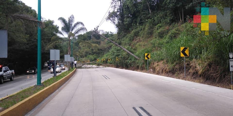 Carretera Xalapa-Coatepec permaneció cerrada por caída de ramas y un poste de CFE