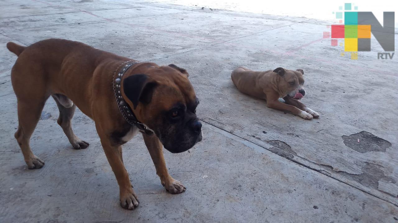 Campaña de esterilización canina y felina en Ilamatlán inicia el 17 de junio