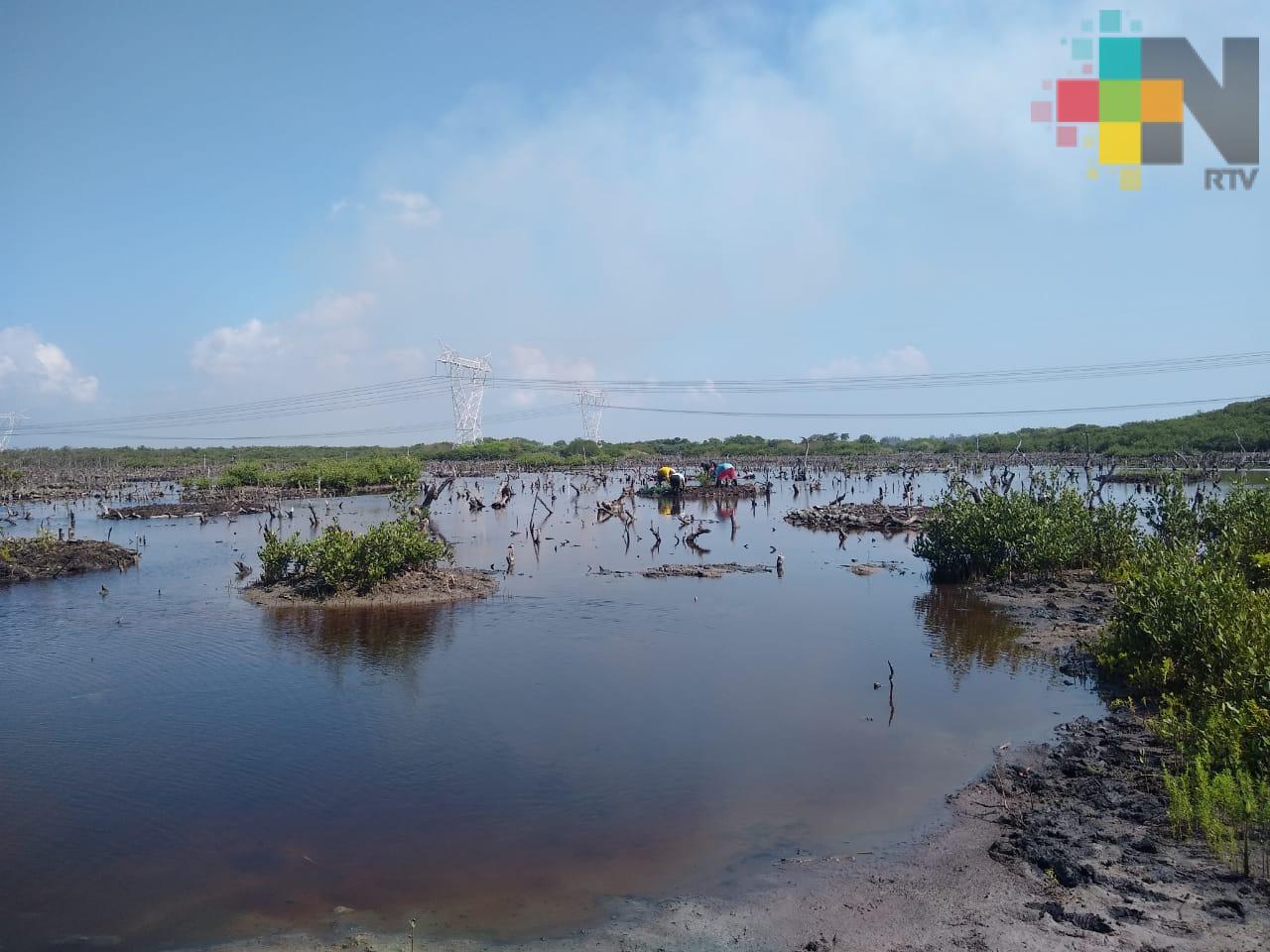 Día Mundial de la Vida Silvestre, una oportunidad para celebrar las diferentes formas de flora y fauna