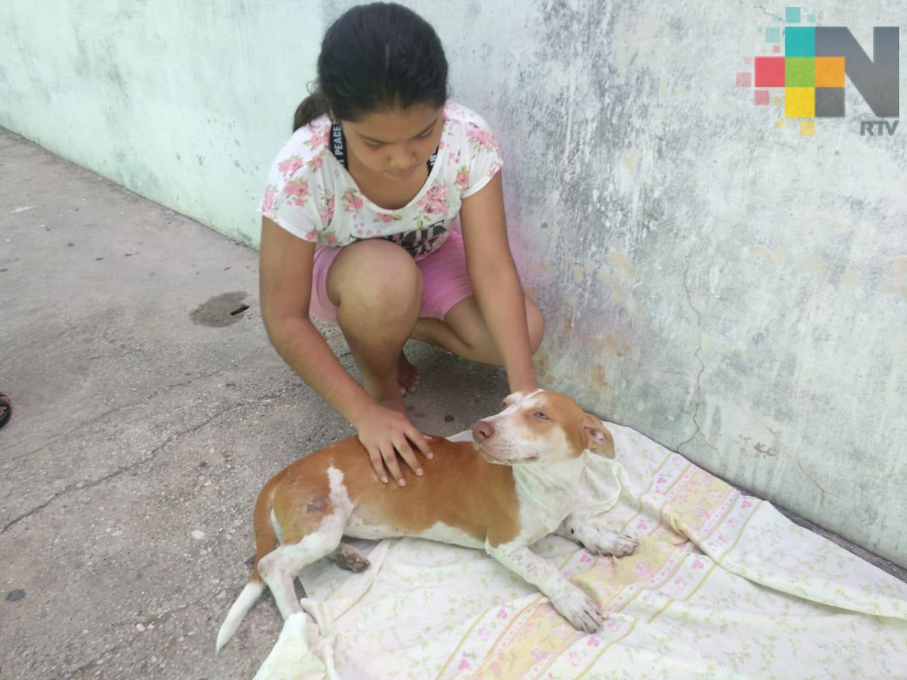 Denuncian que taxista atropelló a su mascota y se fugó, en Coatzacoalcos