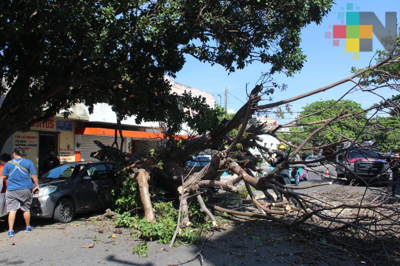 Cae árbol sobre dos vehículos