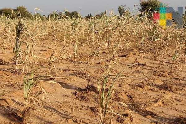 Zona norte de Veracruz, la más afectada por sequía: Conagua