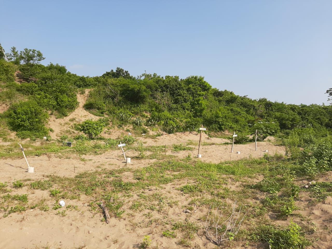 Ordena SCJN entregar información de fosas clandestinas en Veracruz