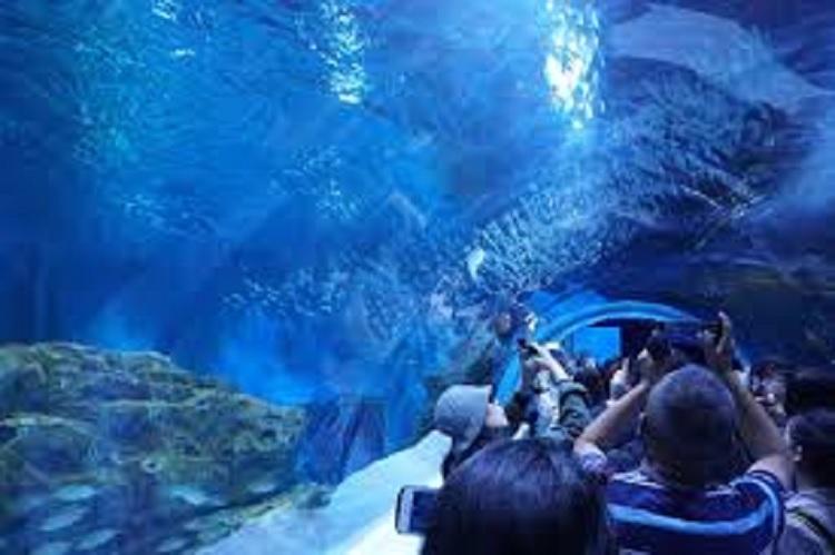 Abre al público acuario chino construido a mayor altitud del mundo