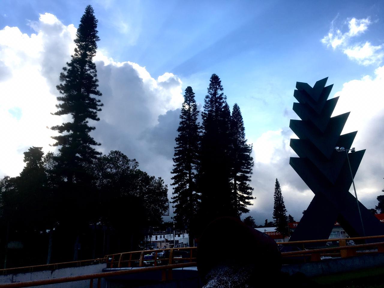 Araucarias en Xalapa