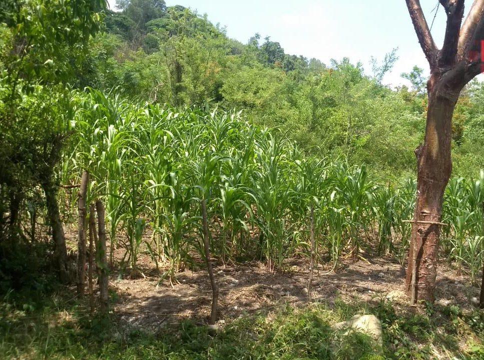 Alimentación sustentable promueve aprovechamiento de espacios reducidos
