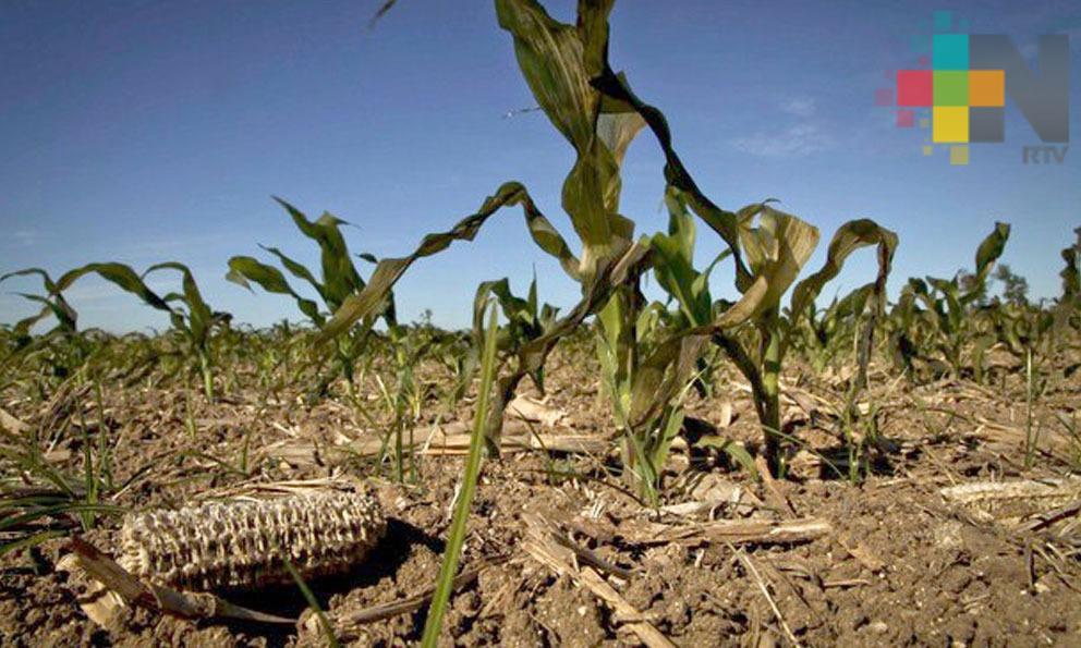 El año 2019 ha sido el más seco en el estado de Veracruz, desde 1981: NOAA