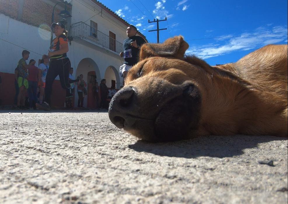 Perro durmiente en Tlacolulan