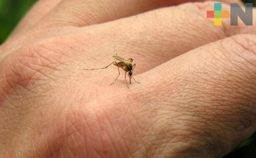 Coordinan acciones en Tuxpan para combatir al dengue