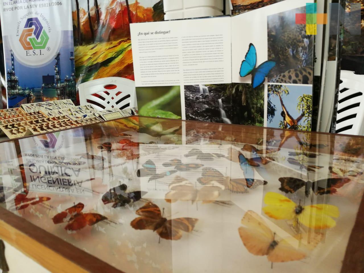 Parque ecológico Jaguaroundi, refugio para las especies rescatadas