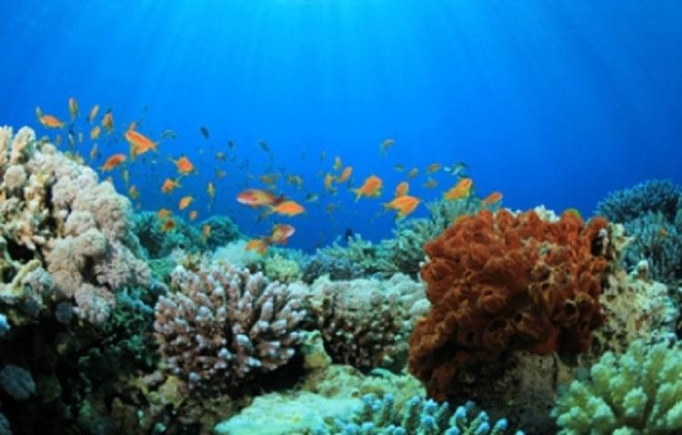 Cambio climático podría terminar con los arrecifes de coral