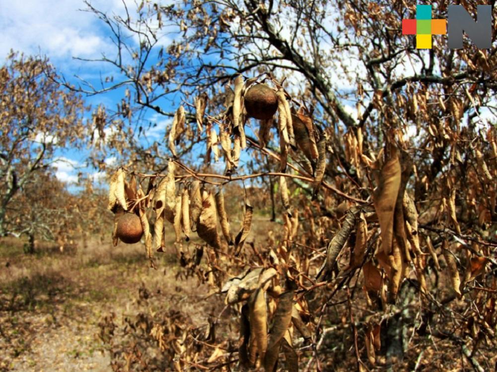 Aseguradora supervisa daños a la citricultura en Misantla y Martínez de la Torre