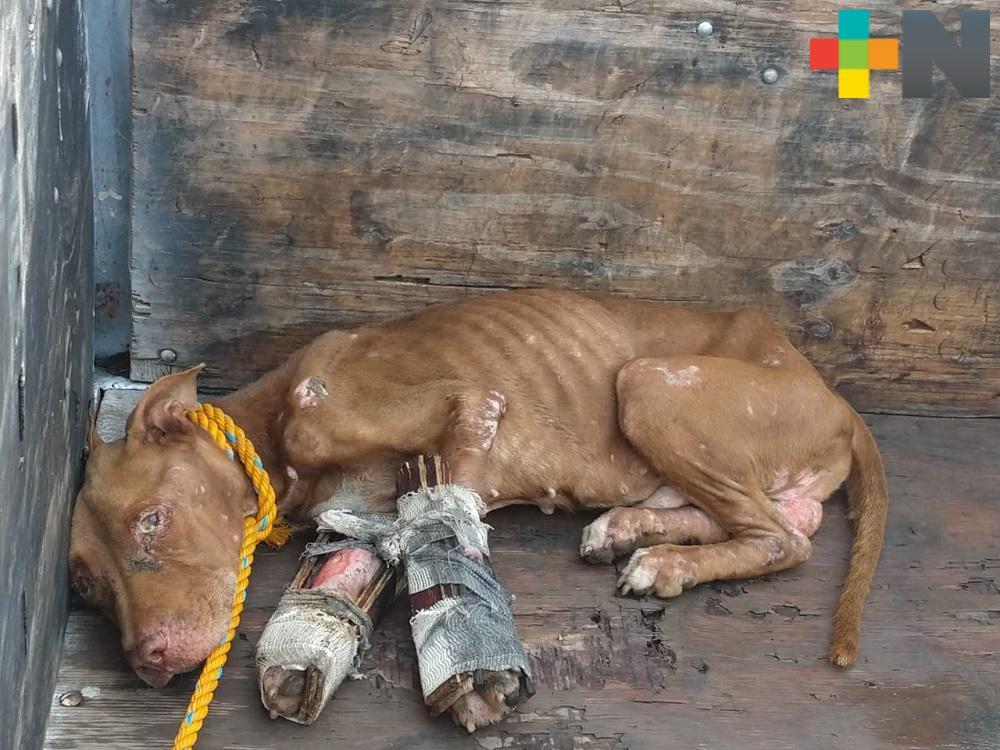 Continúa presentándose maltrato animal en municipio de Veracruz