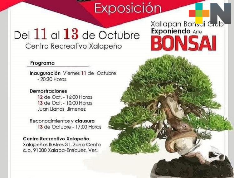 En Xalapa realizarán primera exposición de árboles bonsái