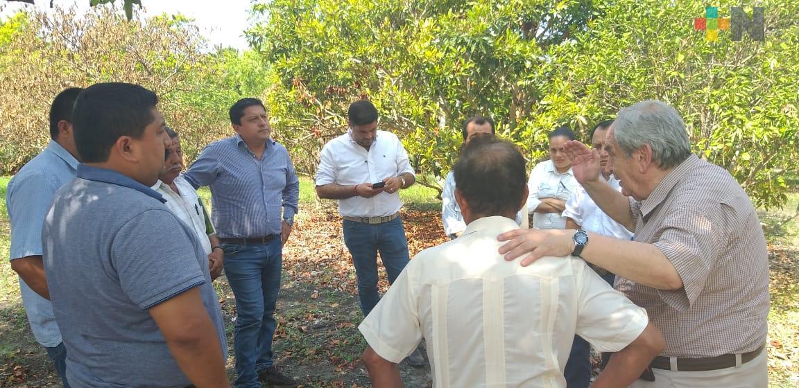 Inicia SEDARPA campaña contra enfermedad de los cítricos, en el Totonacapan