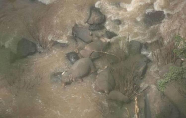 Se eleva a 11 los elefantes muertos en Tailandia