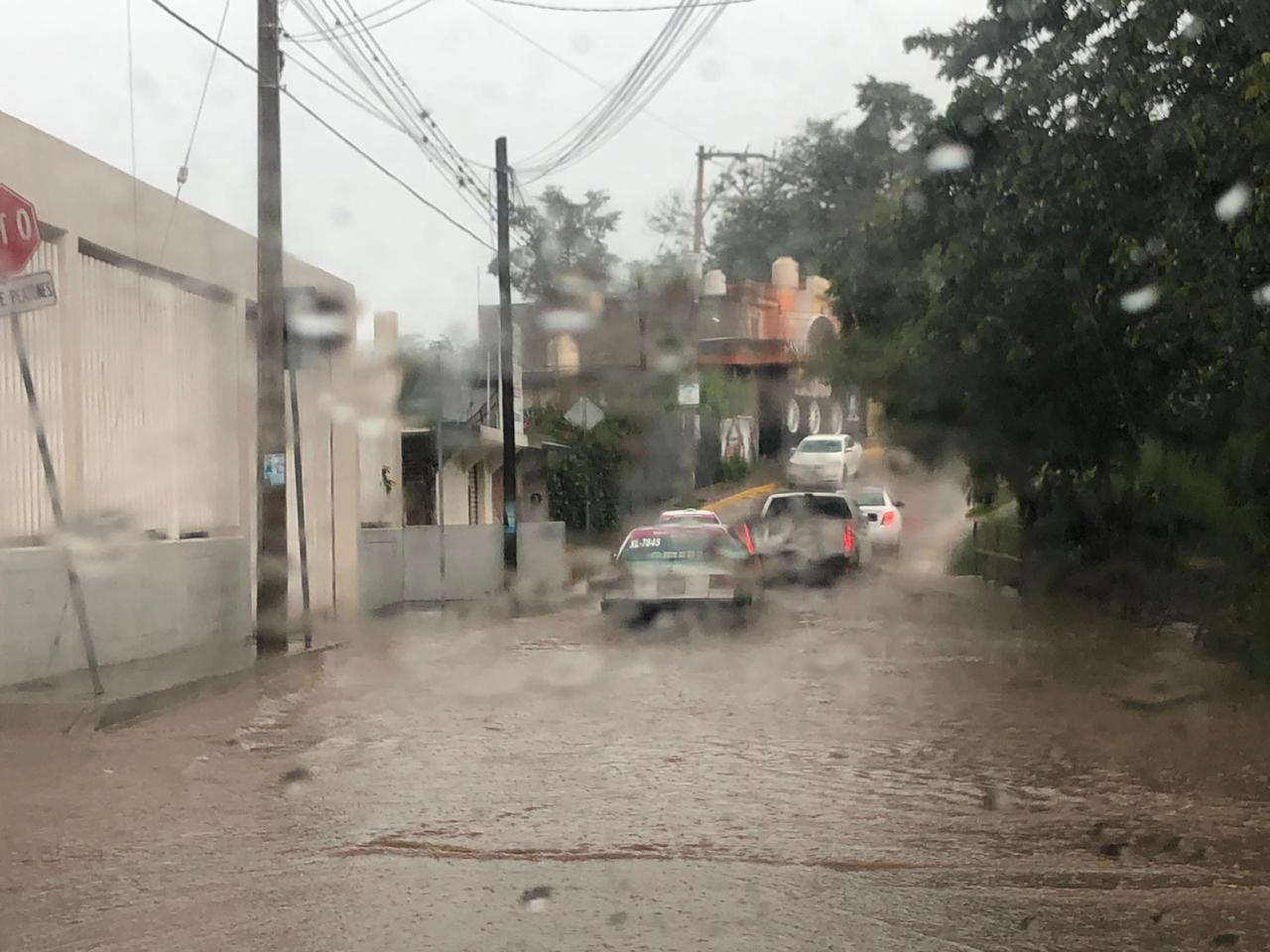 Lluvia en Xalapa genera caída de árbol e inundaciones en diversos puntos de la ciudad