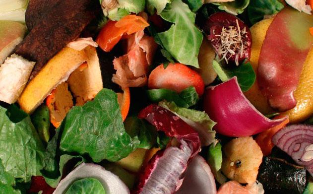Instalarán contenedores para residuos orgánicos en diferentes puntos de  Xalapa