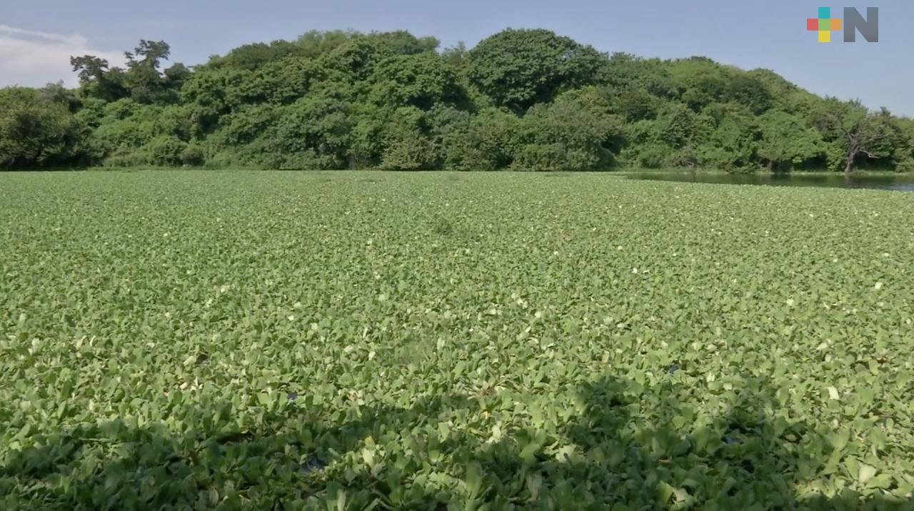 Piden desazolvar laguna del fraccionamiento Lomas del Coyol, en Veracruz puerto