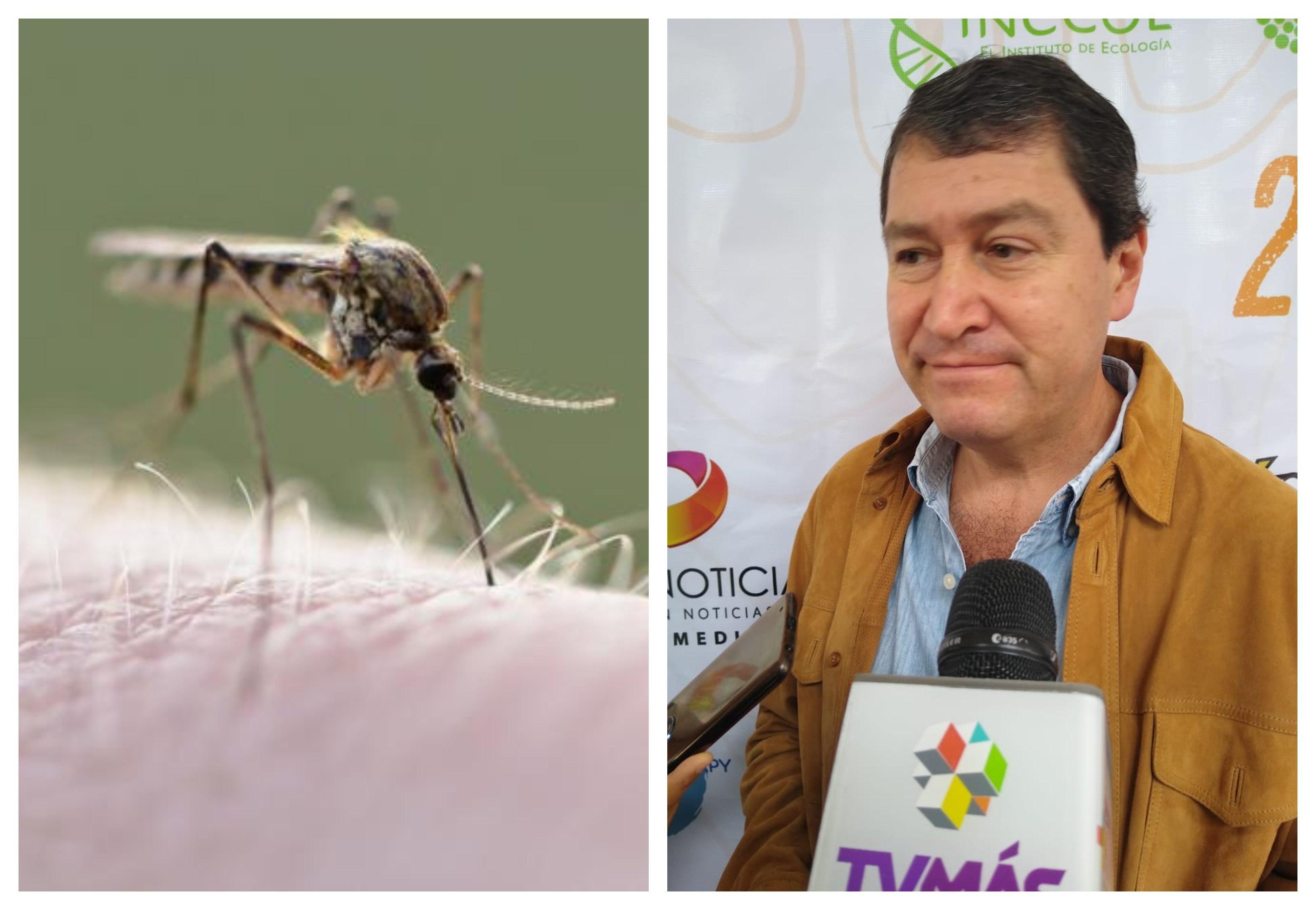 Cambio climático hizo al mosco transmisor del dengue más resistente: Inecol