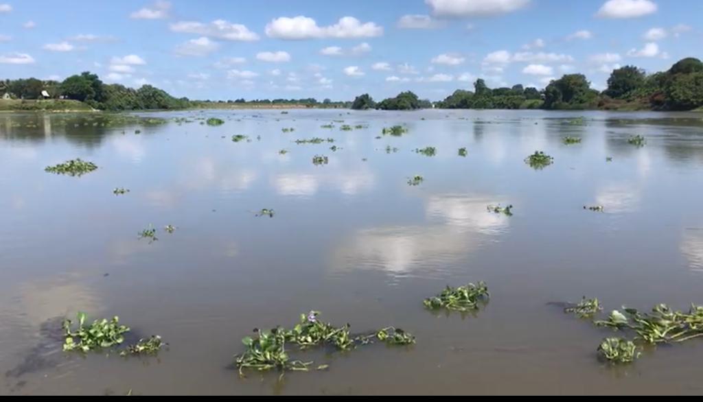 Aumenta nivel del río Papaloapan