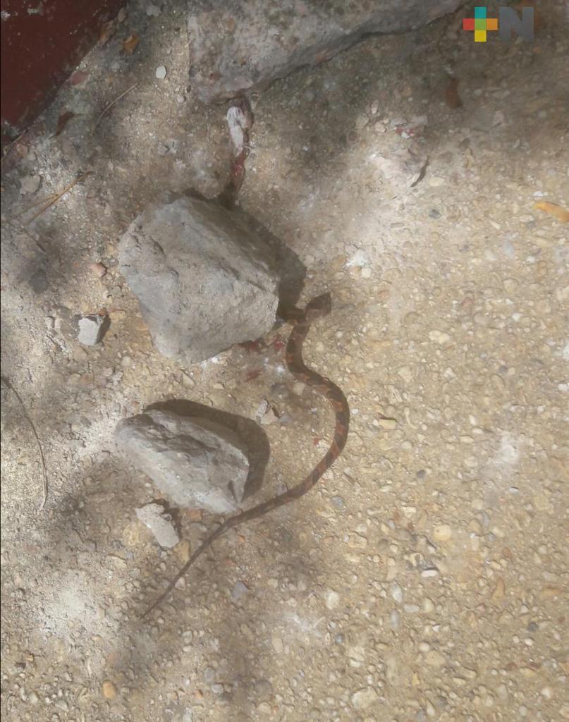 Reportan árbol con nido de serpientes dentro de primaria
