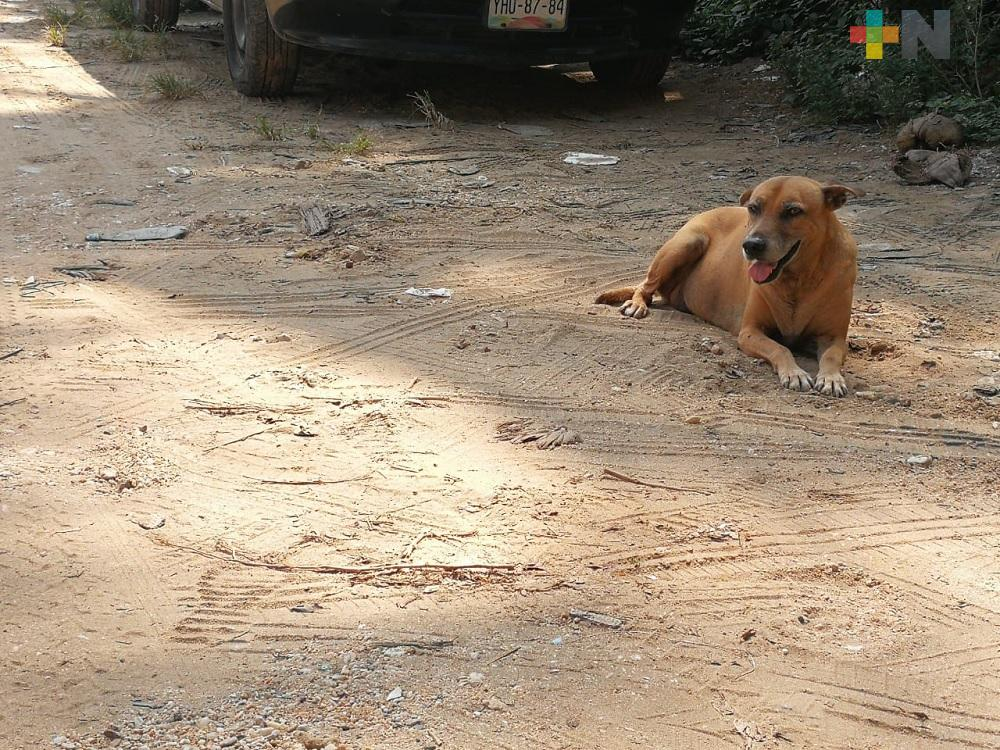 En isla de Alvarado abandonan perros; piden se tomen acciones