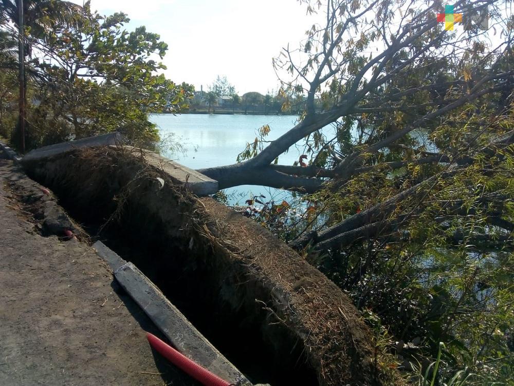 Sin concluir limpieza y retiro de árboles caídos en municipio de Veracruz