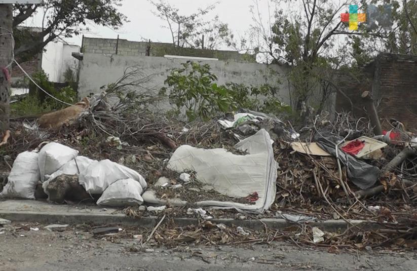 Lote baldío en Veracruz es un foco de infección y nido de vándalos, señalan vecinos