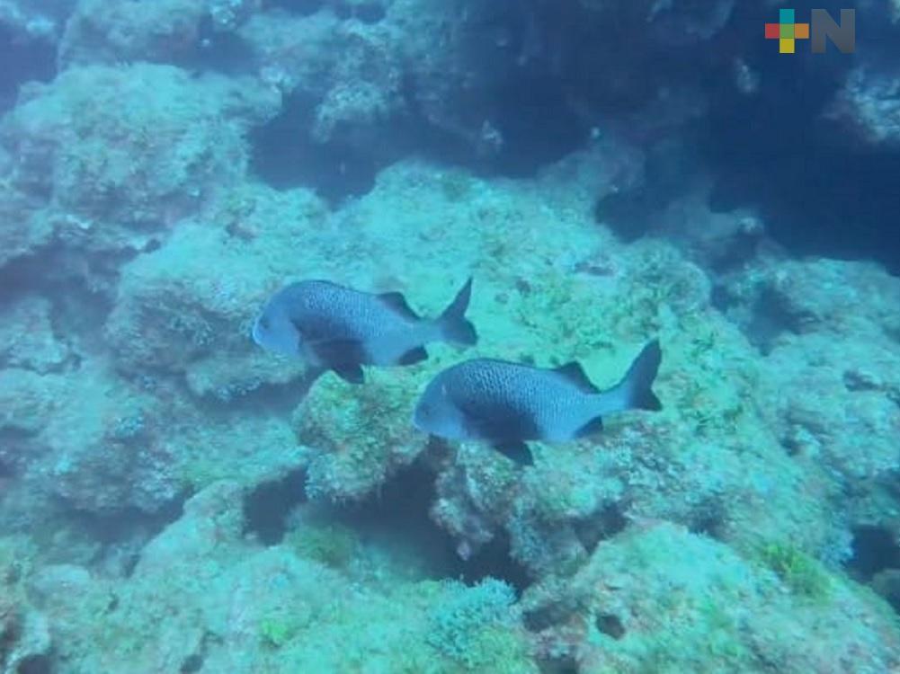 ITBoca y UV continúan con investigación en corredor arrecifal del suroeste del Golfo de México