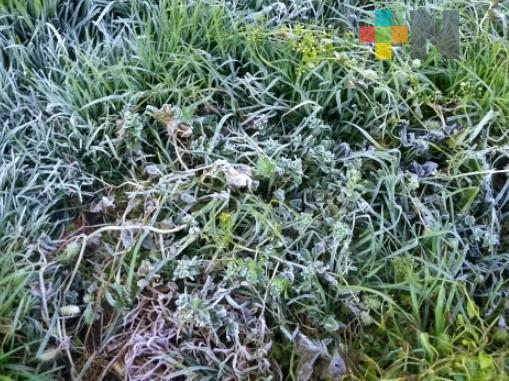Sierra de Huayacocotla recibe temporada invernal con heladas y nevadas