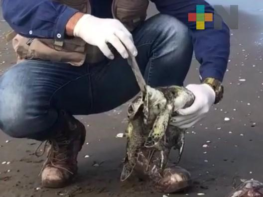 Hallan plásticos en 166 especies del Mediterráneo