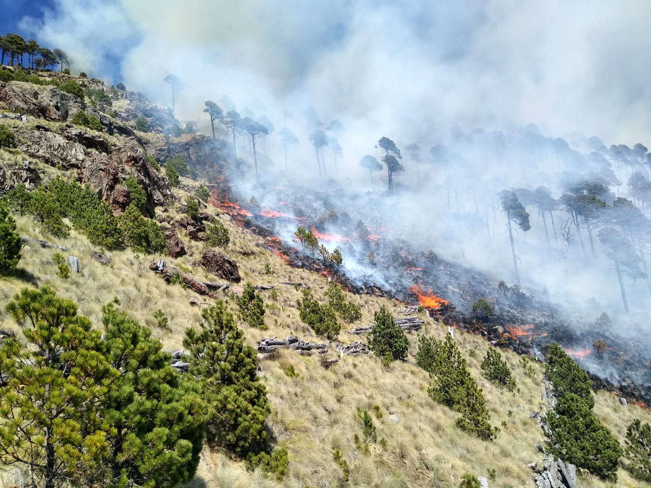 Lleva a cabo el Consejo Estatal Forestal; se han registrado 13 incendios