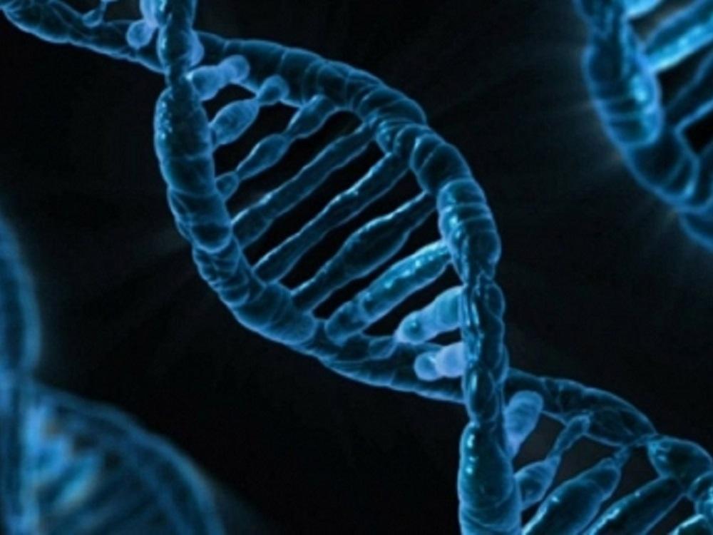 Nuevas regiones de ADN, relacionadas con el cáncer