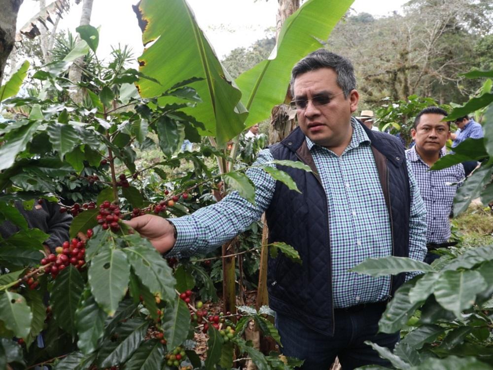 Veracruz promueve y posiciona la calidad de su café: Sedarpa