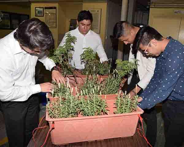 Desarrollan politécnicos energía vegetal