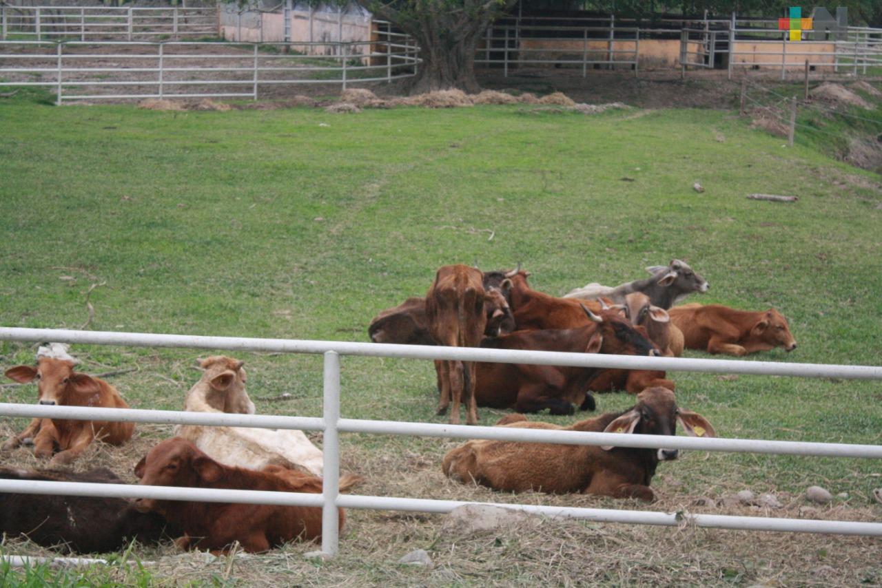 Piden ganaderos vigilancia para evitar abigeato