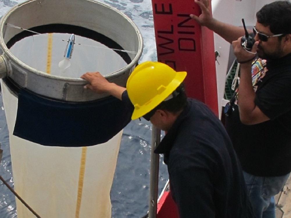 Descubre IPN dos especies de moluscos microscópicos en el Golfo de California