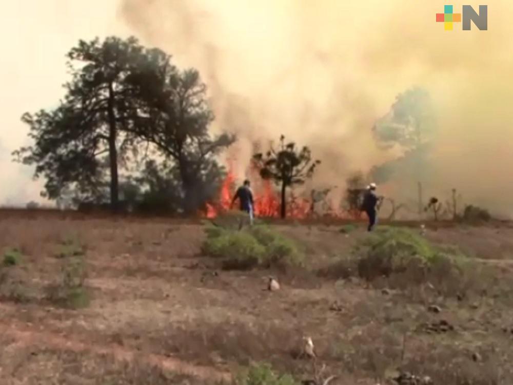 En Veracruz se registran alrededor de 3 mil 318 hectáreas afectadas por 88 incendios forestales: Conafor