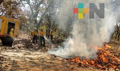 Lluvias ayudaron a evitar incendios forestales durante este fin de semana en Veracruz: Conafor