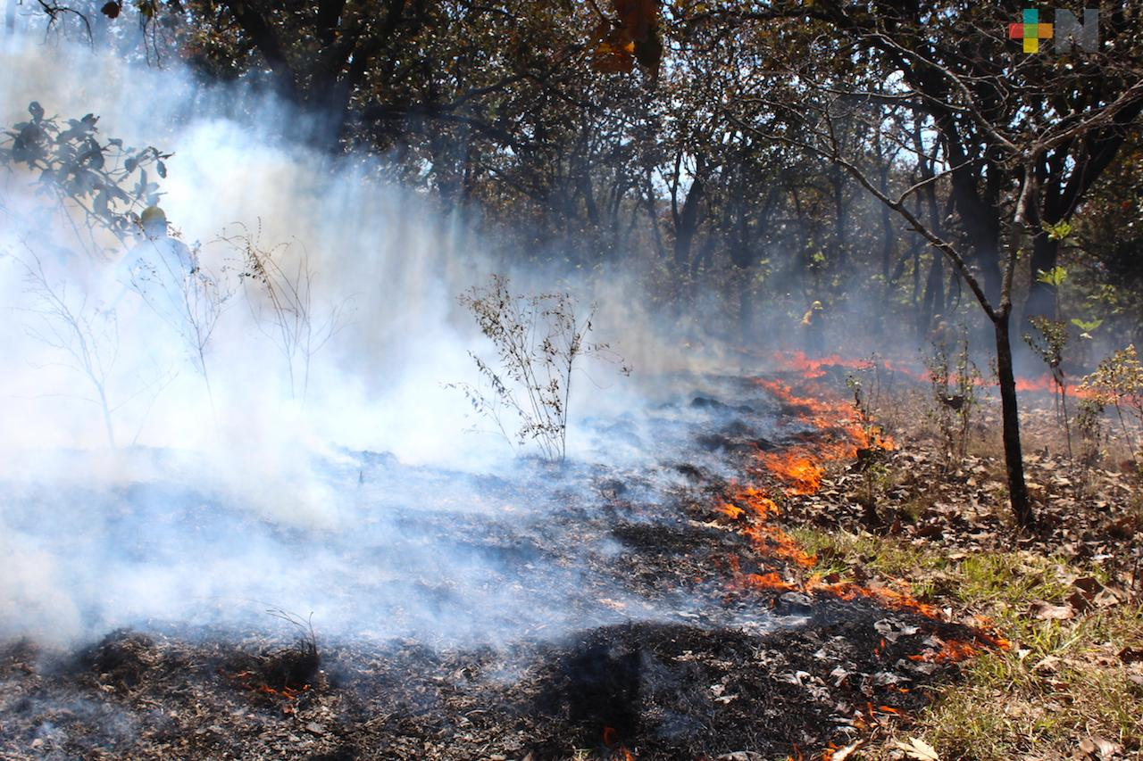 Hasta el momento se han registrado 100 incendios forestales en Veracruz: Conafor