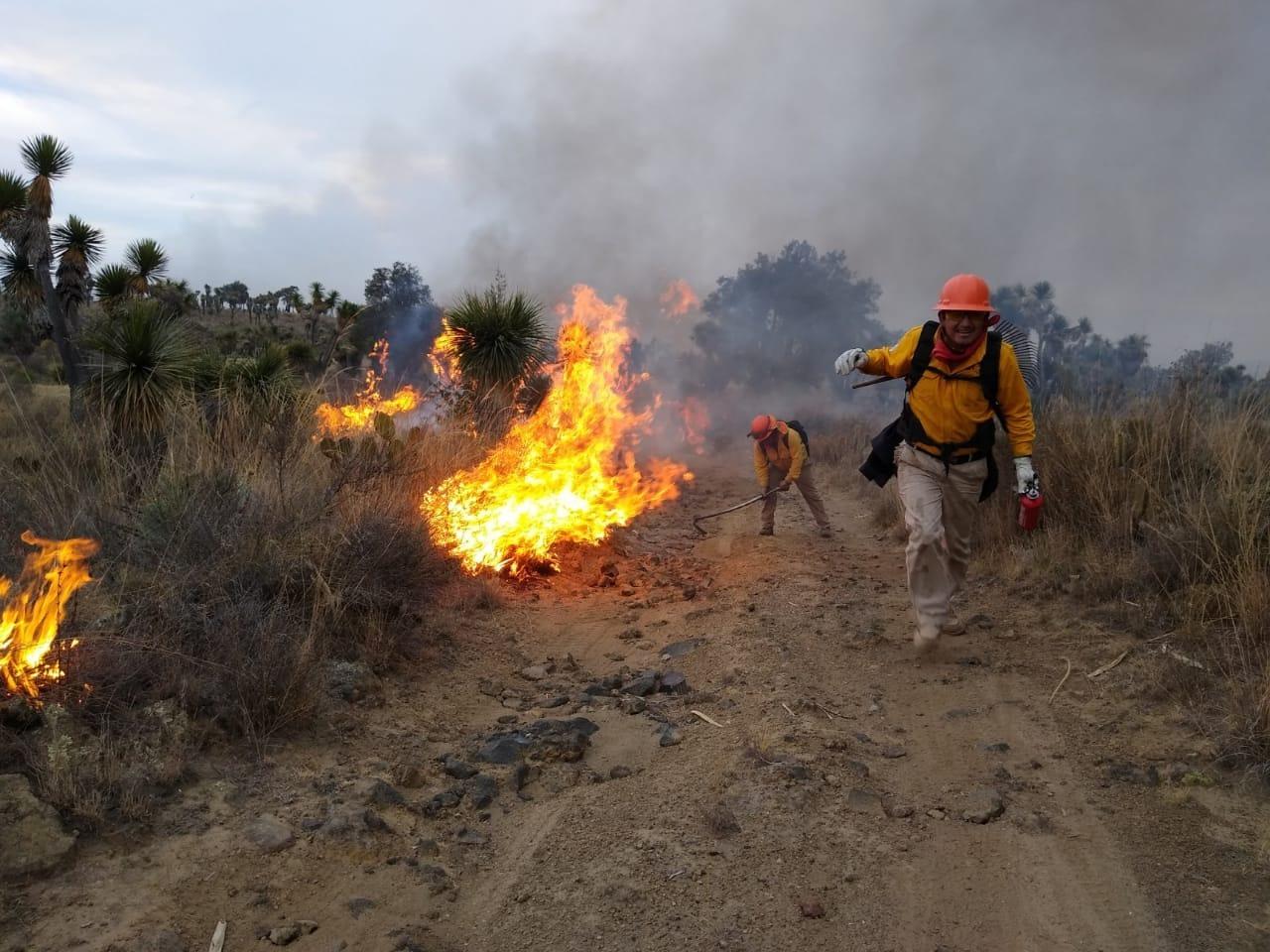 En lo que va de 2020, disminuyeron 60% los daños provocados por incendios forestales: Sedema