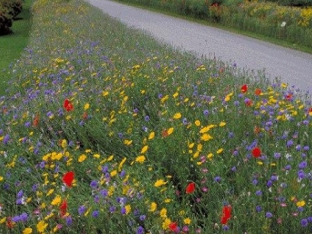 Lanzan app para convertir césped en jardín de flores silvestres
