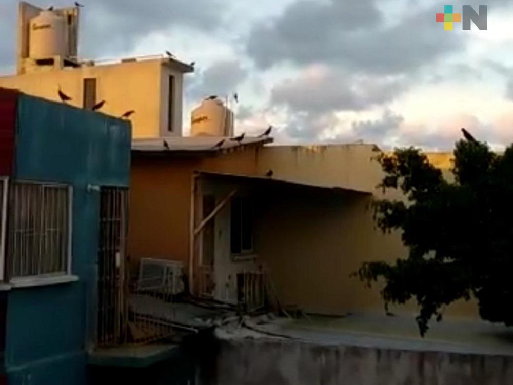En redes sociales, ciudadanos denuncia actitud agresiva de pájaros en fraccionamiento de Coatzacoalcos