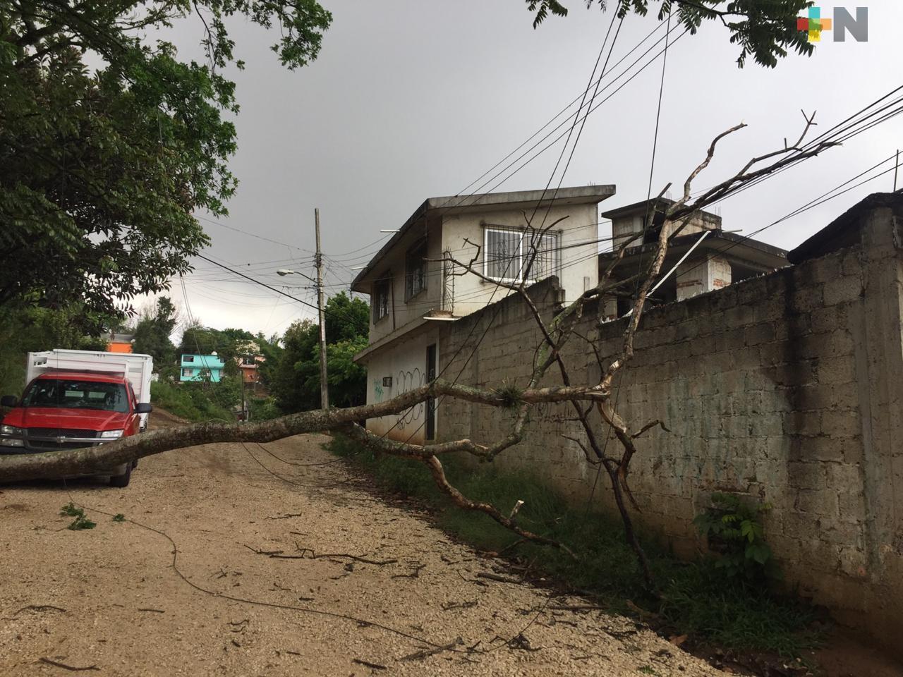 Caída de árboles principalmente, provocaron la lluvia y vientos en algunos municipios de Veracruz