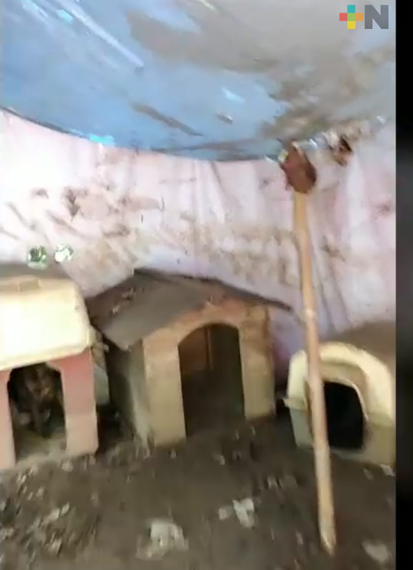 Lluvia afecta al Refugio Maussi Rescate Animal;  piden láminas para proteger a perros y gatos