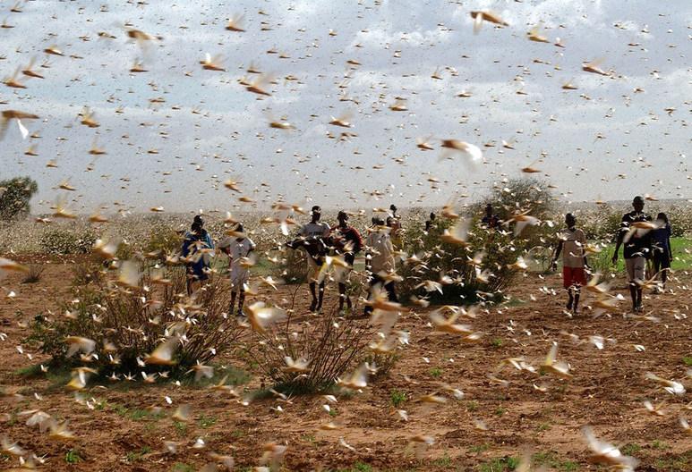 Una plaga de langostas atraviesa el norte de Argentina y amenaza con llegar a Brasil