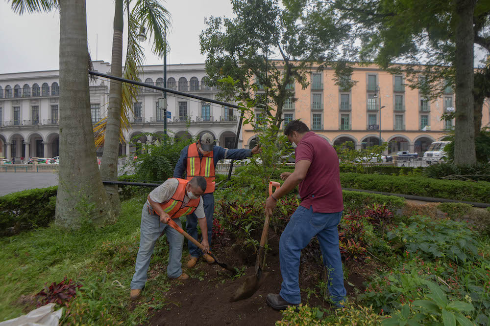 Reforestan espacios públicos para conmemorar el Día Nacional del Árbol