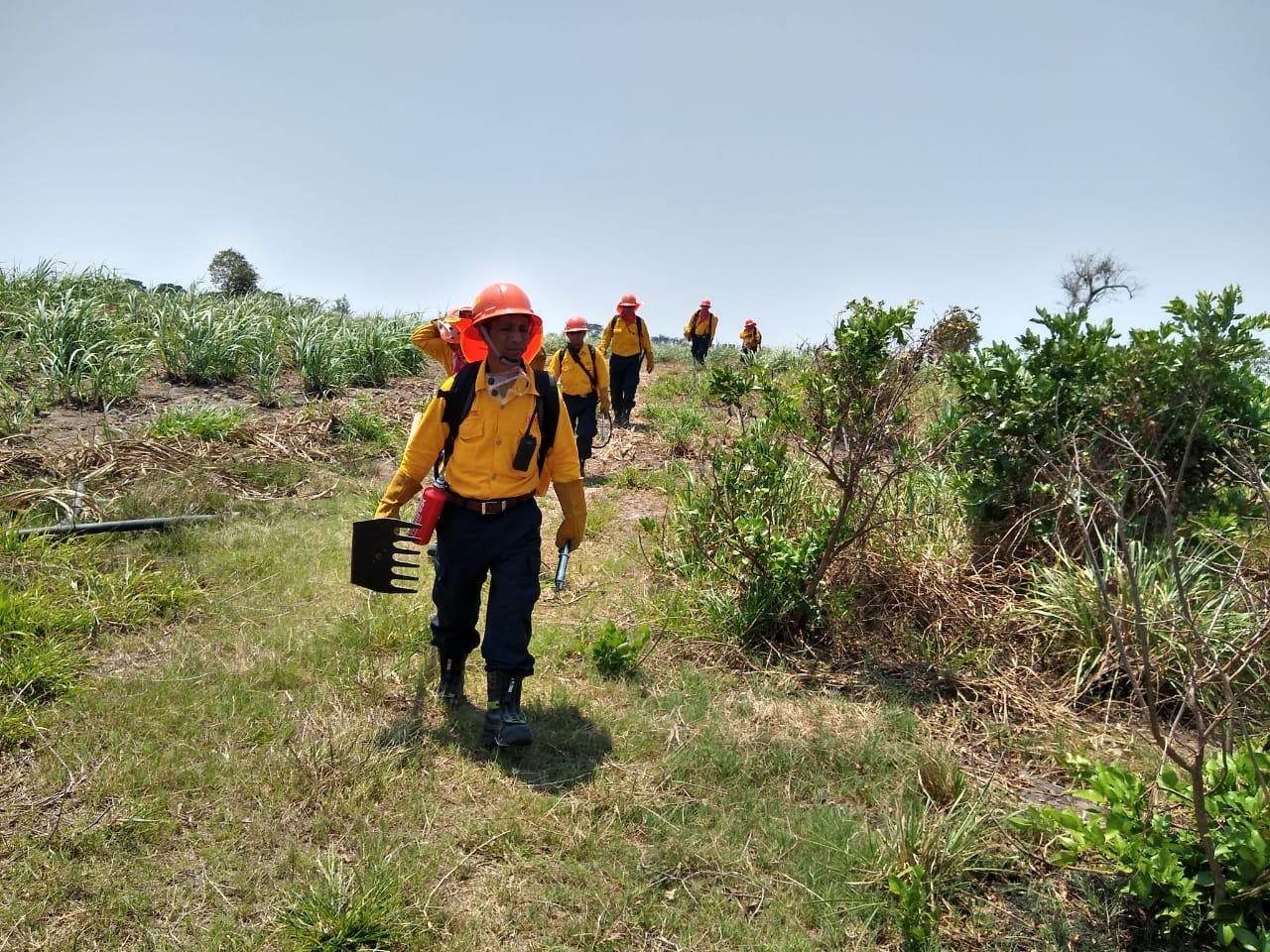 Restaura SEDEMA 500 hectáreas afectadas por incendio en Las Vigas